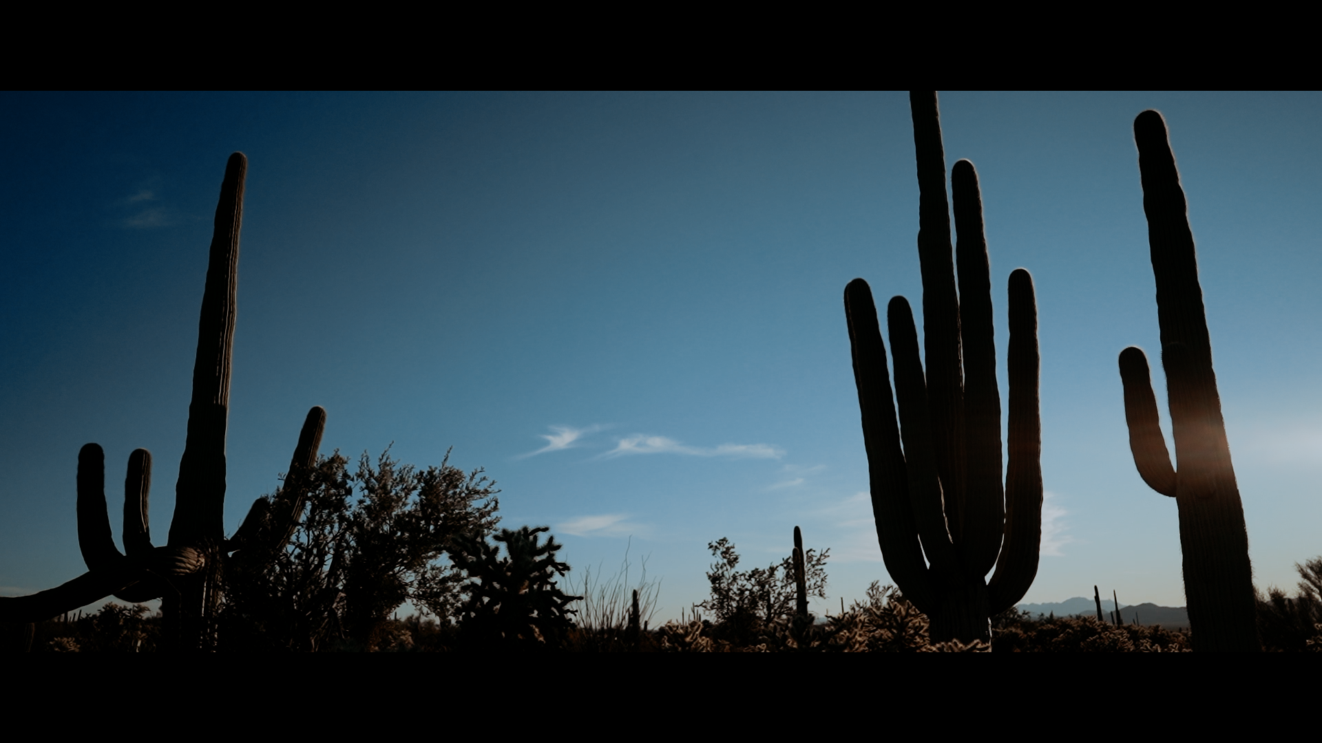 Brooke + Cole | Tucson, Arizona | Saguaro National Park
